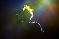 Tool performs on March 6, 2014 at the Moda Center in Portland, OR