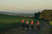 Horseback riding tour with Equestrian Wine Tours at Stoller Estate Vineyard with Mt. Hood in the background, Dundee Hills AVA, Willamette Valley, Oregon