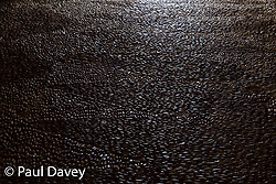 Cobblestones catch the light at John the Baptist of Pico Fort in Funchal, Madira. MADEIRA, September 25 2018. © Paul Davey