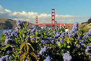 Wildflowers Around The Golden Gate