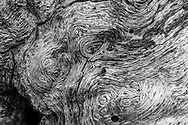 Can you see the  faces in this oak?