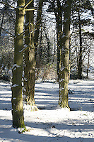 Snow covered trees on Killiney Hill Dublin Ireland November 2010