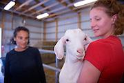 19253Kristin Stover, researching chewing in alpacas and horses, and her advisor, Dr. Susan Williams, they are both working at the Ohio University farm..Kristin Stover(red shirt) and Dr. Williams (dark shirt)