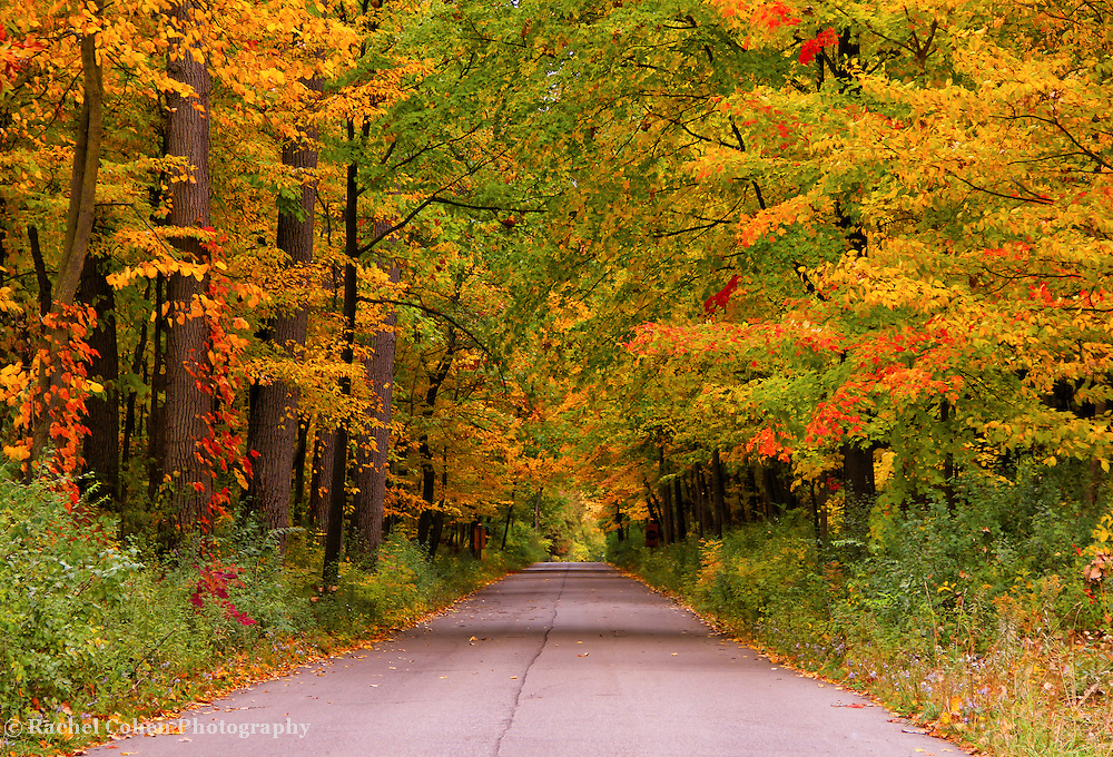 &quot;Color Stroll&quot;<br /> <br /> Enjoy the beauty of a quiet autumn stroll along this tree lined lane in the Michigan countryside! Wonderful fall color is everywhere!!<br /> <br /> Autumn Landscapes by Rachel Cohen