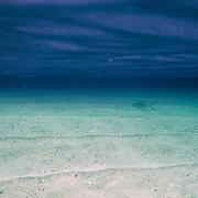 Arquipélago das Quirimbas , viajem em velha no coração de umas dos mais incrível arquipélago do mundo com uma das mais antigas embarcação do oceano indico. (Ibo Island Lodge)