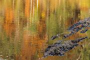 Watercolor Shoals