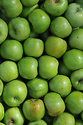a stack of Green Granny Smith apples in the market