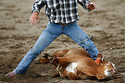 062010-Evergreen, COLORADO-sundayprca-Jack Hadley, of Cañon City, CO, finishes roping a calf in the Tie Down Roping competition at the 2010 Evergreen Rodeo Sunday, June 20, 2010 at the El Pinal Arena..Photo By Matthew Jonas/Evergreen Newspapers/Photo Editor