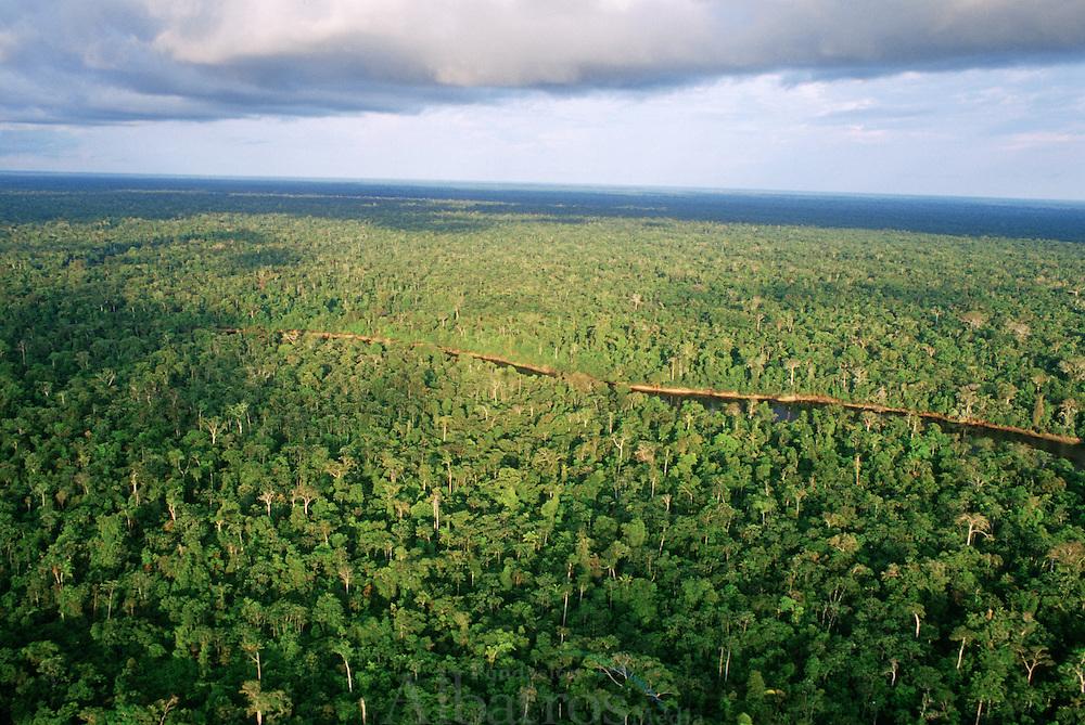 Reserva Nacional Pacaya Samiria (RNPS). Es el &aacute;rea de bosque h&uacute;medo tropical inundable m&aacute;s extenso de la Amazon&iacute;a Peruana y la segunda m&aacute;s grande &aacute;rea natural protegida del Per&uacute;, con una extensi&oacute;n superior a los dos millones de hect&aacute;reas. Est&aacute; delimitada por los dos grandes r&iacute;os, el Mara&ntilde;&oacute;n y Ucayali, que originan el Amazonas. <br /> <br /> Las condiciones clim&aacute;ticas permiten que la Reserva posea una alta diversidad de flora y fauna silvestre y una gran riqueza de vida acu&aacute;tica: 527 especies de aves, 102 de mam&iacute;feros, 69 de reptiles, 58 de anfibios, 269 de peces y 1025 especies vegetales silvestres y cultivadas.<br /> <br /> &copy; Alejandro Balaguer/ Fundaci&oacute;n Albatros Media.