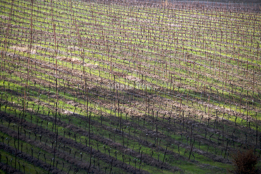 bare vineyard during late fall season