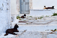 Grece, Cyclades, chat des rues. // Greece, Cyclades, street cat