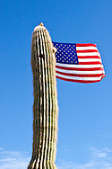 The US Flag fly's from a Arizona flagpole