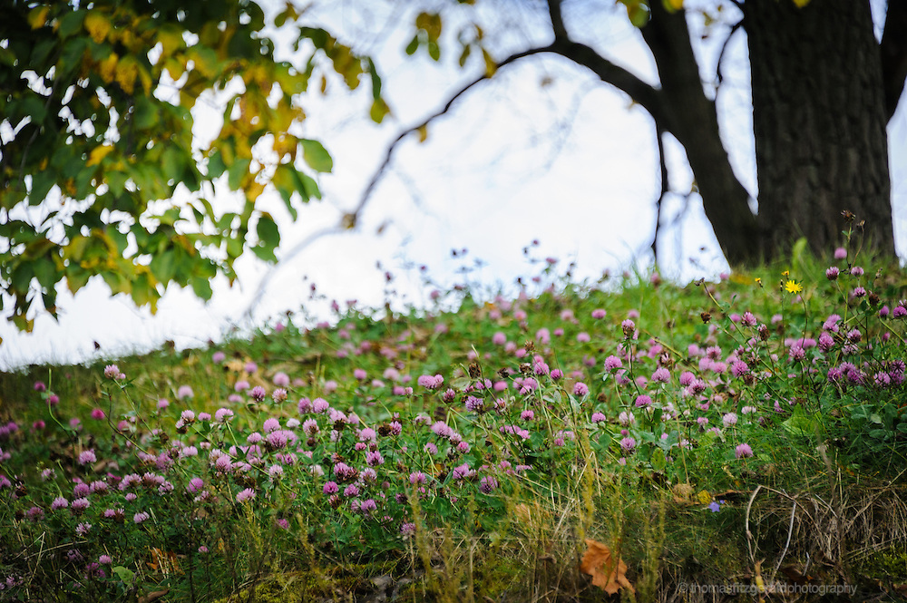 Oslo, Norway, October 2012: Wild Flowers in the grounds of the Oslo Fortress