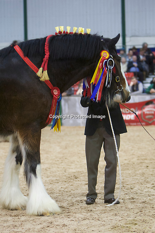 SHS Spring Show 2017  Best Shod Winner  (No.135) Wendy Toomer-Harlow's 8 year old Gelding WALTON BOMBER.  <br /> Shod by J &amp; K Balfour from Tealing, nr Dundee