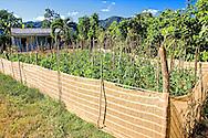 Garden in the San Carlos area, Pinar de Rio, Cuba.