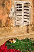 Cat and fishing nets, Sipanska Luka, Sipan Island, Dalmatian Coast, Croatia