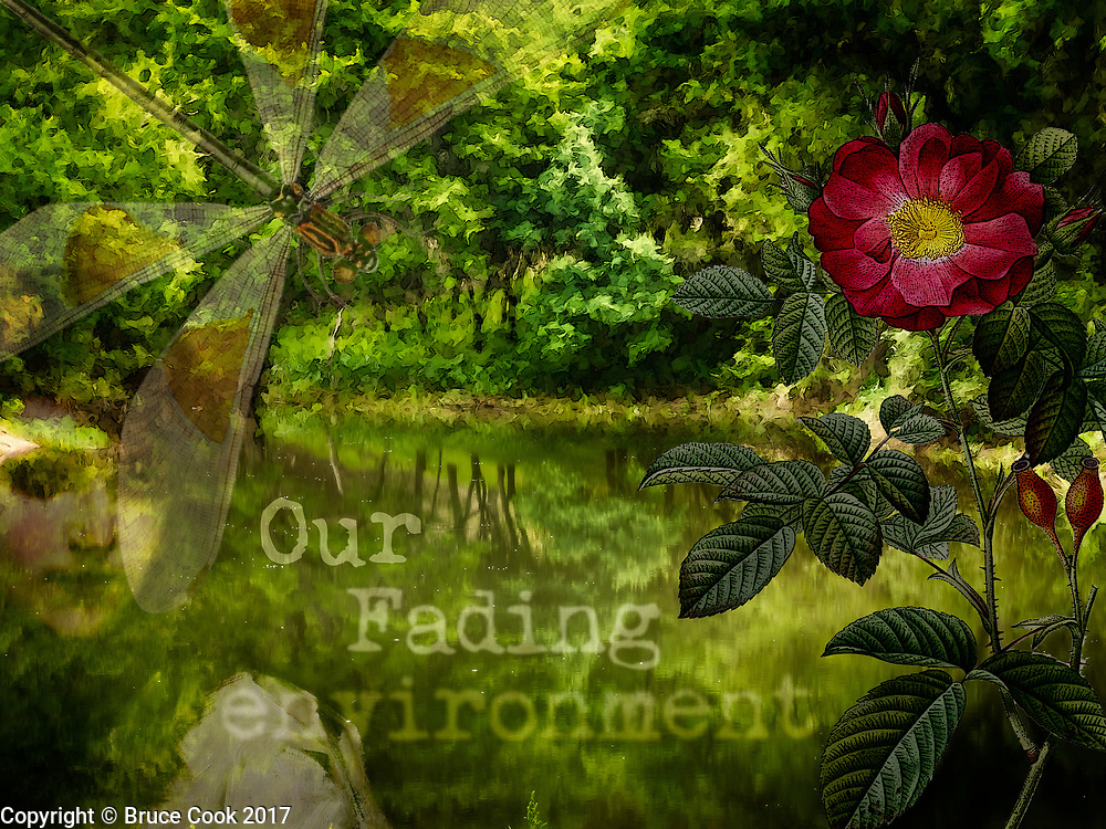 Our Fading Environment