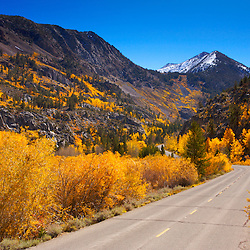 South Lake Road and aspens in autumn in the Eastern Sierra Nevada Mountains near Bishop, CA.