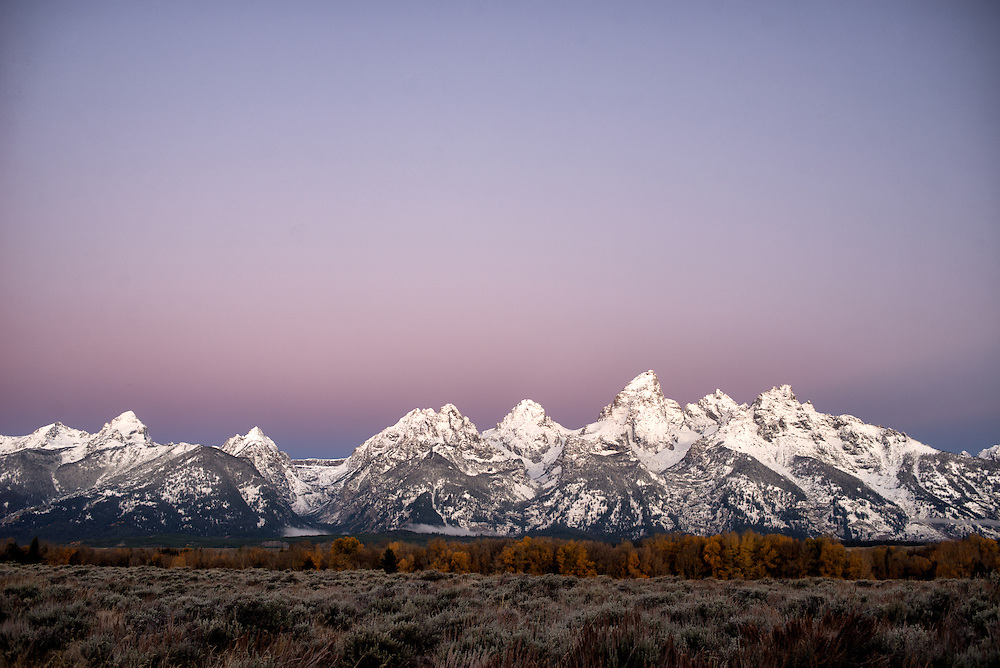 Morning alpenglow and the snowy Teton mountain range, with trees in fall colors and sage grass.