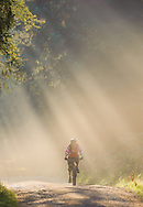 Cyclist in misty forest, Kirkhill, Aberdeenshire and Moray District,Forestry Commission, Scotland