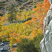 Bishop creek canyon. Bishop. California, USA.
