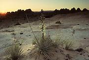 Desert, Utah Desert, Sandstone, Southern Utah, Utah
