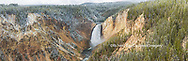 67545-09109 Lower Falls in fall, Yellowstone National Park, WY