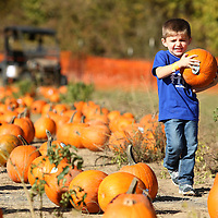 Adam Robison | BUY AT PHOTOS.DJOURNAL.COM<br /> Jaxon Perry, 5 of Tupelo, a student at Calvary Baptist pre-school carries the pumpkin he picked from the bunch to take home with him after he and his classmates visited the pumpkin patch at the Tupelo Buffalo Park.