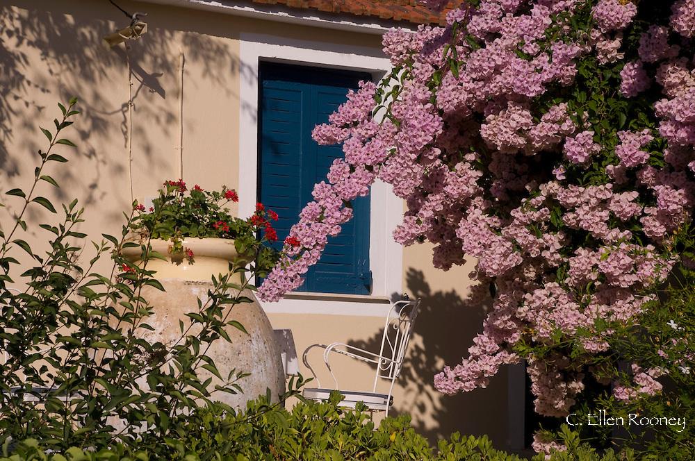 Pink bougainvillea growing in front of a house in Fiskardo, Kefalonia, The Ionian Islands, Greece