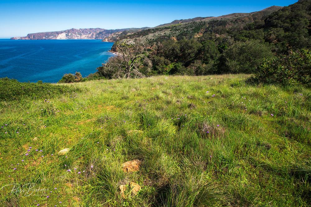 Prisoner's Harbor, Santa Cruz Island, Channel Islands National Park, California USA
