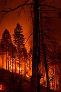 Slash piles burning at night following thinning of mixed conifer forest, with a falling cinder leaving a streak down the trunk of a dead tree, north slope of San Juan Mesa, Jemez Mountains, NM, © 2018 David A. Ponton