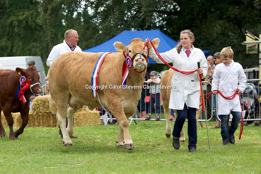 The Cattle in classes, at rest and in the Grand Parade Aldorough & Boroughbridge Agricultural Show 2017, Newby Hall, North Yorkshire