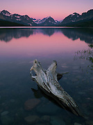 Reflections and  tree  stump study at Sherburne Lake, in the Many Glacier region of Glacier National Park, Montana, USA