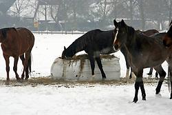 Paarden et kuilgras<br /> Zwolle  2005<br /> Photo © Hippo Foto