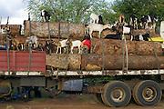 «C'est la dernie?re fois que je voyage en 3ie?me classe Pe?pette!».Transport divers sur une route principale du Mozambique en Afrique. On transporte des cargaisons aussi varie?s que des troncs d'arbre, des che?vres, des pneus et des bidons d'essence en me?me temps pour des raisons d'e?conomie. .