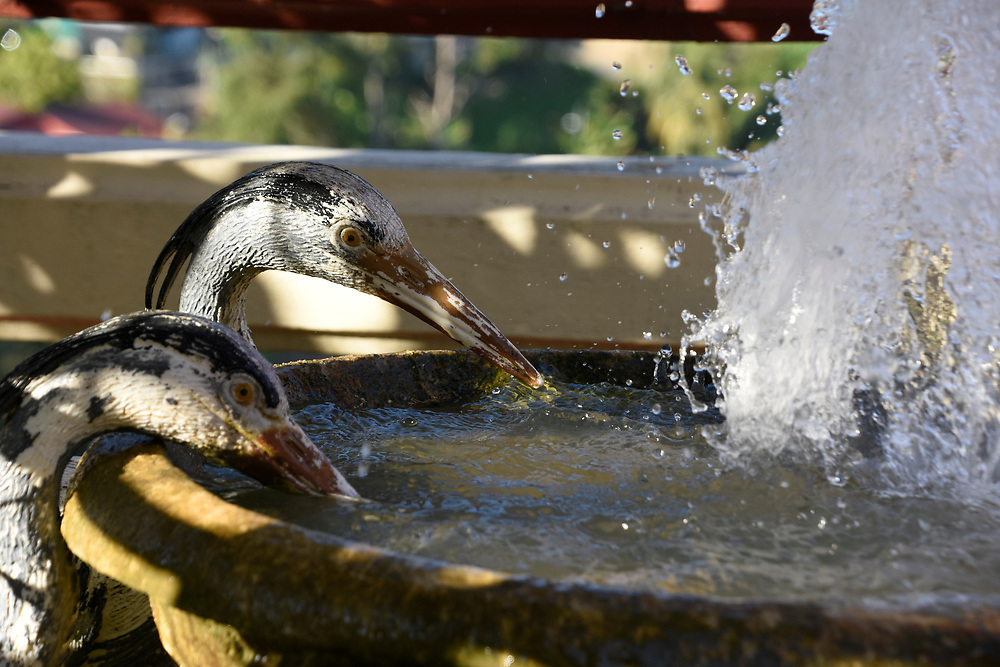 Birds drink from a fountain at the kek Lok Si Temple