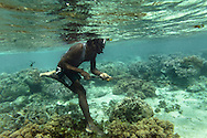 Spear fishing - Ni Vanuatu man  walking along the reef with a local version of spear gun, which consists of a piece of wood, a rubber band and a metal spear. Uleveo, Maskelyne Island, Malampa Province, Malekula, Vanuatu