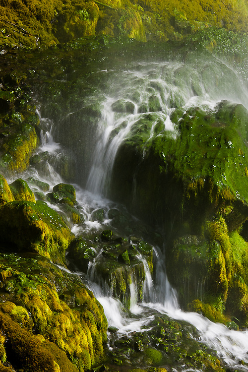 A detail of yellow and green moss near the waterfall Seljalandsfoss, in the South of Iceland