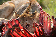 A CARVNIVORE'S DELIGHT<br />
