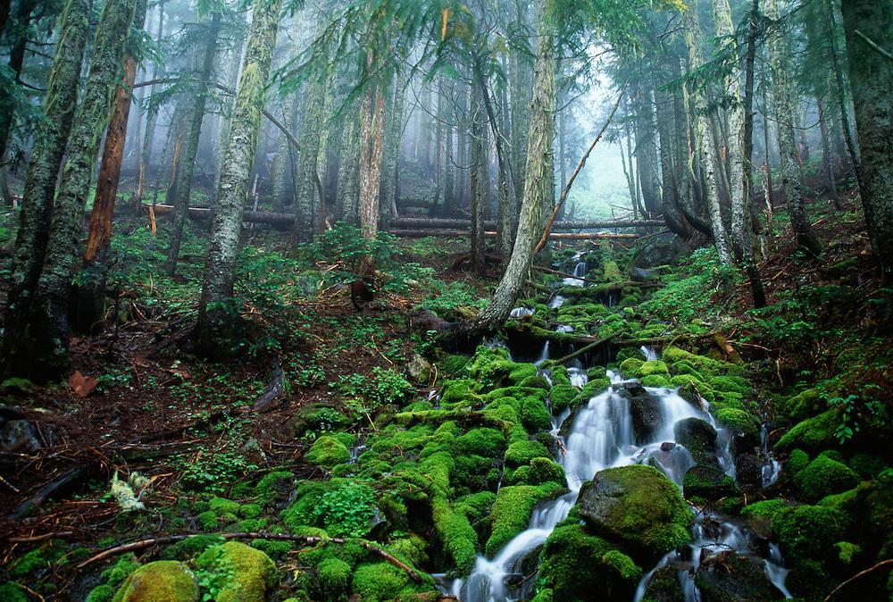 Washington, stream on Mt. Rainier