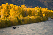 Fishermen float their driftboat along the Snake River amidst colorful fall foliage in Jackson Hole, Wyoming.