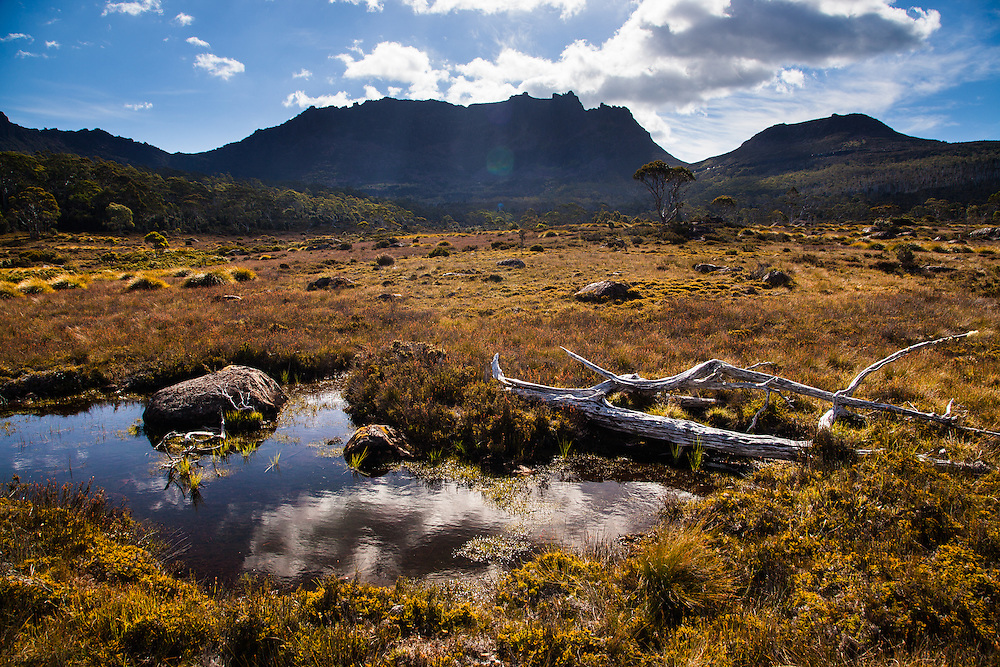 Mt Ossa from Pinestone Valley, Cradle Mountain - Lake St Clair National Park.