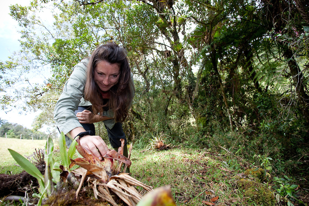 Lucy Cooke searches for lost frogs near Sonson, Antioquia, Colombia