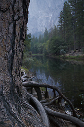 A forest reflects into the Merced river at dawn in Yosemite National Park, California.