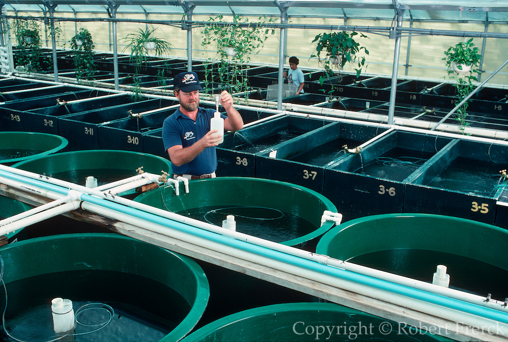 AQUACULTURE Tropical Fish Farm - Ekkwill Farms near Tampa, Florida; Spawning Tanks in hatchery with 90 varieties including catfish