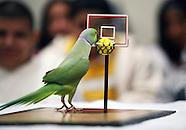 AJ the Celebrity Parakeet