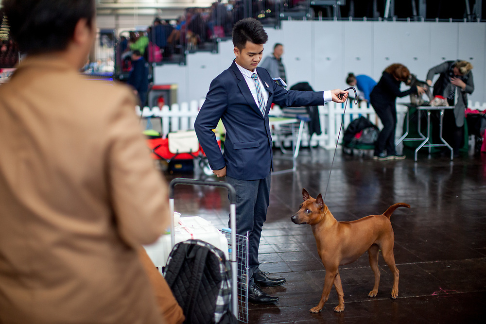 Participants form Asia which travelled just for the World Dog Show to Leipzig to present their breed at the Leipzig Trade Fair. Over 31,000 dogs from 73 nations will come together from 8-12 November 2017 in Leipzig for the biggest dog show in the world.