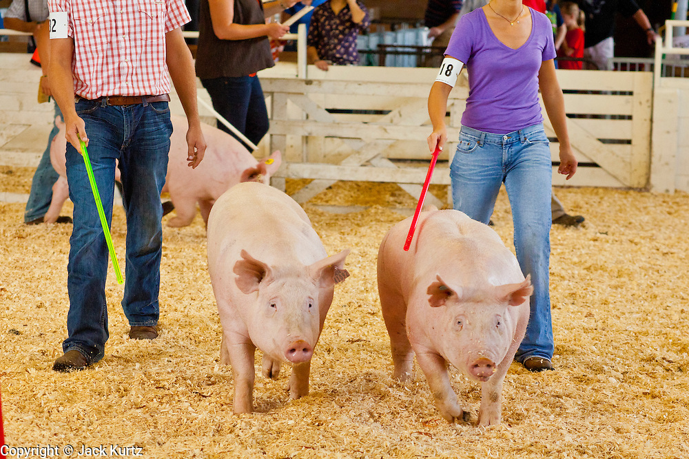 """03 SEPTEMBER 2011 - ST. PAUL, MN: 4-H members show the pigs at the Minnesota State Fair, Sept. 3. The Minnesota State Fair is one of the largest state fairs in the United States. It's called """"the Great Minnesota Get Together"""" and includes numerous agricultural exhibits, a vast midway with rides and games, horse shows and rodeos. Nearly two million people a year visit the fair, which is located in St. Paul.   PHOTO BY JACK KURTZ"""