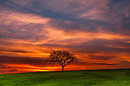 A tree on a green meadow at sunset