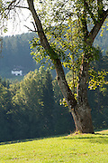 Landschaft, Lamer Winkel, Bayerischer Wald, Bayern, Deutschland | landscape Lamer Winkel, Bavarian Forest, Bavaria, Germany